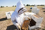Owner Mike Durst examines a bee hive frame at Mark T. Durst and Sons.