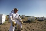 Owner Mike Durst sits in the midst of his hives at Mark T. Durst and Sons.
