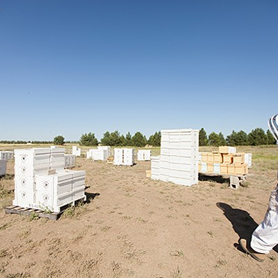 Photos: Local beekeepers and their hives