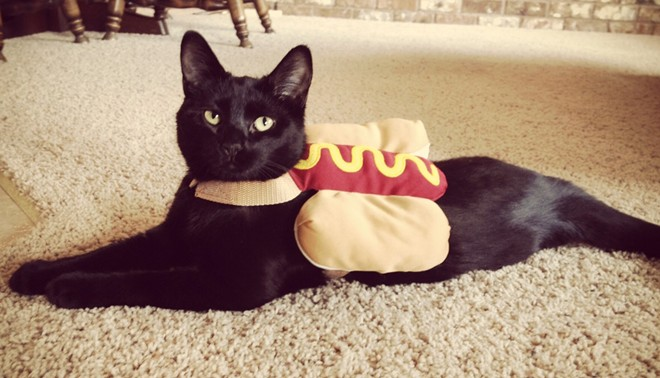 Pancakes the hotdog, from Spokane, Wash. Submitted by Carrie Paine.