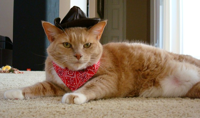 Peaches the cowgirl (cow-cat?), from Spokane, submitted by Holly Prosser.
