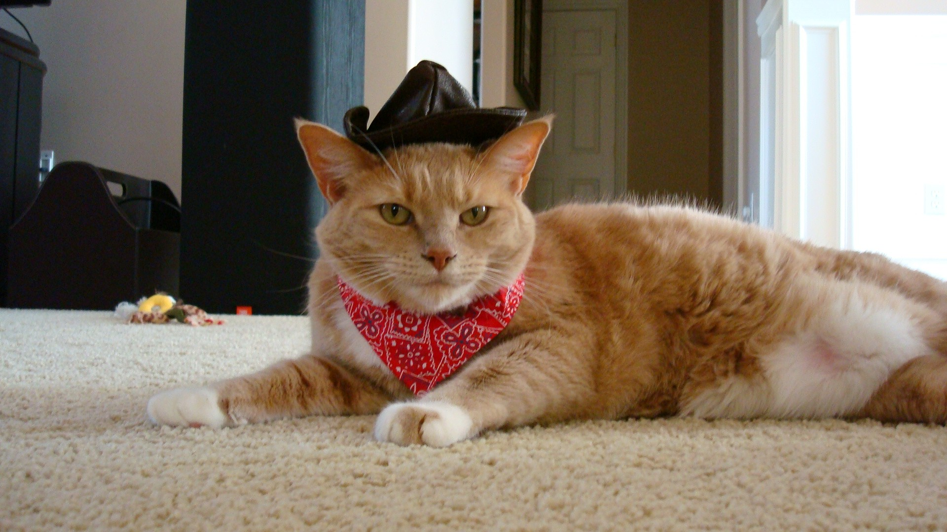 CAT FRIDAY Results of the Halloween Cats Photo Contest   Bloglander