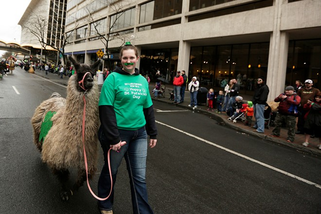 Amanda Wick walks a llama by spectators. - YOUNG KWAK