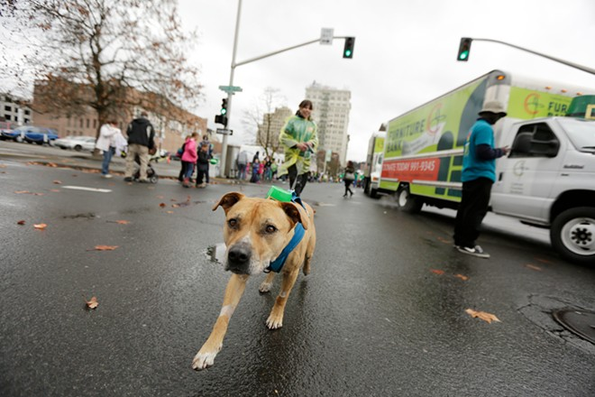Rescue dog Abbey leads her owner Lesley-Anne Stormo. - YOUNG KWAK