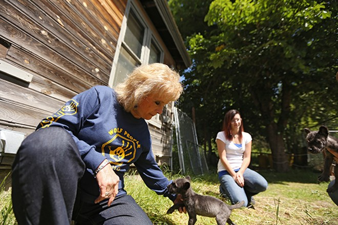 Owner Nancy Taylor, left, plays with two 5-week-old wolf puppies, Teto and Ki Lani, as store manager Shelby Brower watches. - YOUNG KWAK