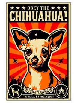 obey_chihuahua.jpg