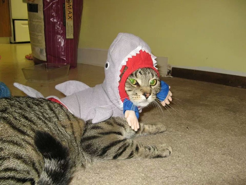 Quila the shark-cat, from Spokane. Submitted by Jessica Leach.