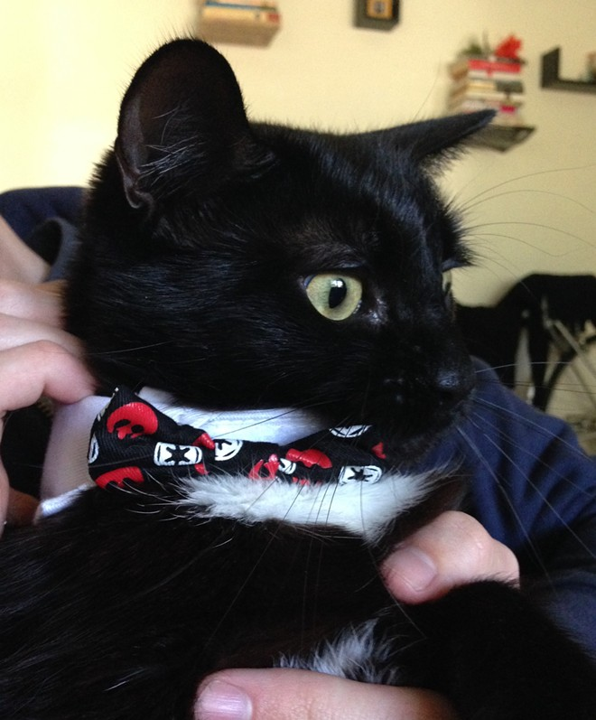 Rafi is a big fan of Star Wars, and donned a themed collar and bow tie for the occasion of Halloween. Reportedly, right after this photo was taken he furiously ripped the adornment off in a fit of feline rage. Rafi terrorizes the home of Inlander staff writer Heidi Groover.