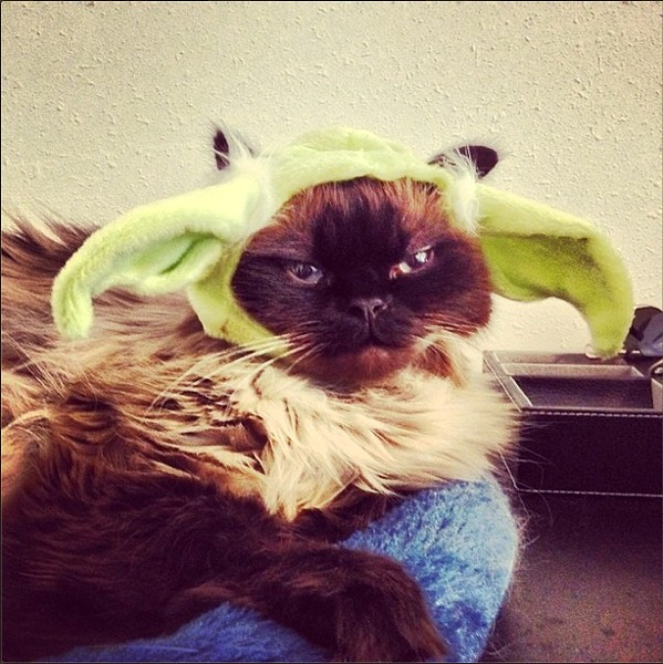 """Samwise as Yoda (""""Kill you for this, I will.""""), from Spokane. Submitted by Ali B., also an Inlander staffer."""