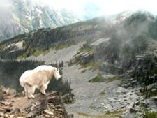Scotchman's Peak is the highest point in Bonner County - ZACH HAGADONE
