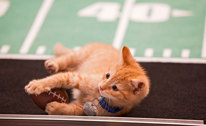 See the first annual Kitten Bowl this Sunday, Feb. 2, at noon. - HALLMARK CHANNEL