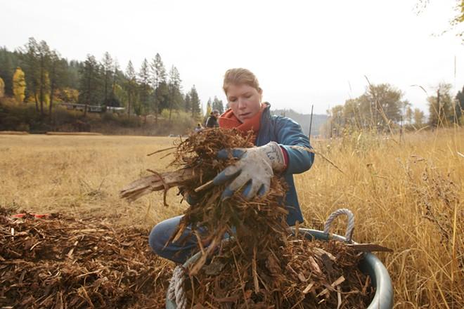 Stephanie Bultema fills a bucket with mulch. - YOUNG KWAK
