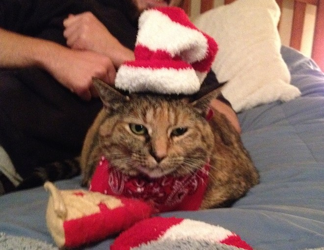 Sylvie the elf (with a slice of pie), from Olympia, Wash. Submitted by Stephanie S.