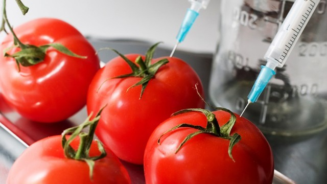 fourtomatoes2syringes.jpg