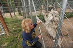 Taylor greets Arctica, a 2-year-old Arctic and timber wolf mix.