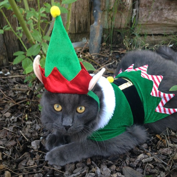 Teddy the elf, from Lake Elsinore, California. Submitted by Jennifer S.