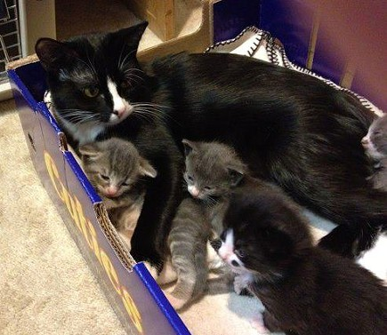 This mama cat and her litter of six stayed with the Forsyths back in April 2012 until the kittens were old enough to be adopted out. That's Harvey in the bottom right. - LIBBY FORSYTH