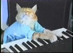 _resized_300x221_keyboard_cat.jpg