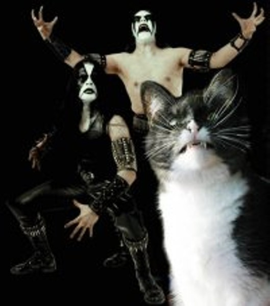 _resized_200x227_goth_cat_metal_rock_angry_1271265244s.jpg