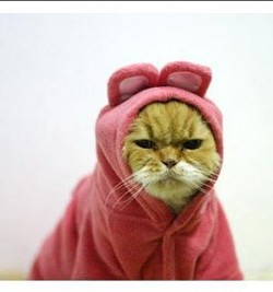 _resized_300x320_angry_cat_in_pink_rabbit_costume_1.jpg