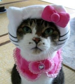 _resized_200x224_hello_kitty_cat_clothing_01.jpg