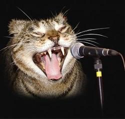 _resized_300x285_karaoke_cat.jpg