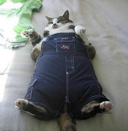 fat_cat_294x300.jpg