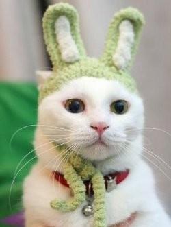 _resized_250x331_funny_cat.jpg