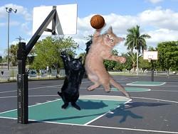 basketballcats.jpg