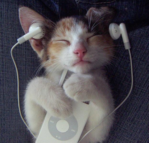 the_cat_enjoy_the_ipod.jpg