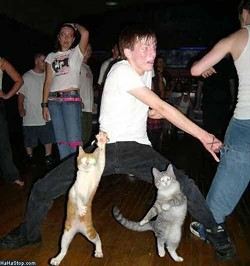 cat_dance_off.jpg