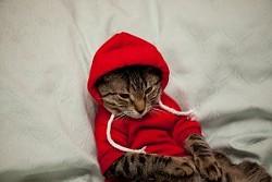 _resized_300x200_hipster_cat.jpg