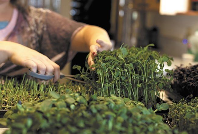 Micro-greens are part of an excellent salad. - ANNIE KUSTER