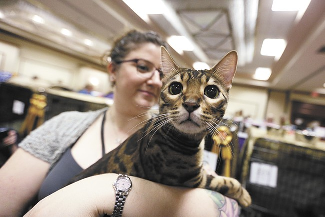 Milo the Bengal, with owner Gina Demmerly - YOUNG KWAK