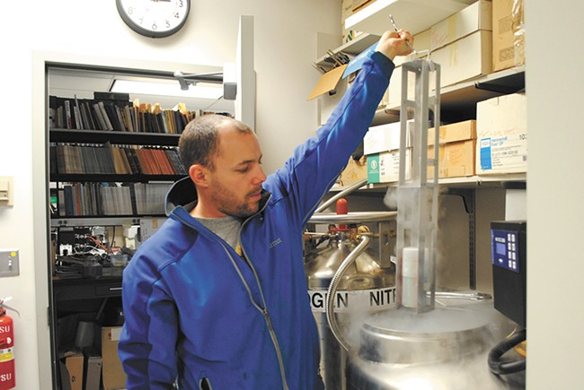 WSU researcher Brandon Hopkins showcases the largest collection of frozen bee semen in the world. - RUSS WALSH