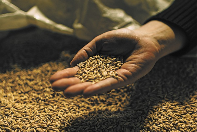 Grains are used in the malting phase of the brewing process. - DAN JACKSON PHOTO