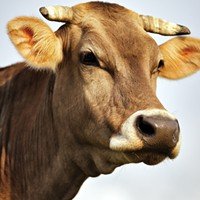 Meat management discussion, Into Africa and other events in the Inland Northwest