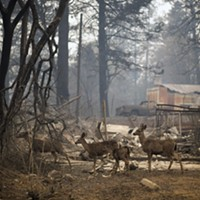 A grim search as deadly wildfires grip California