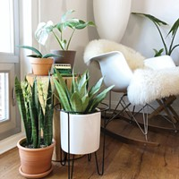 The Secret Life of Plants: Advice from <i>The Inspired House Plant</i>
