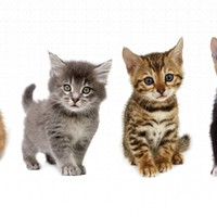 #UberKITTENS is coming to Spokane. Tomorrow!