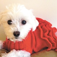 Knitting for Shelter Pets, and more