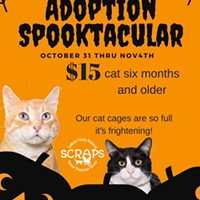 $15 to adopt a new friend? SCRAPS needs help clearing shelter after influx of cats