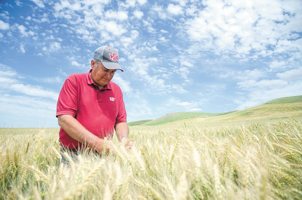 "Gary Bailey, 63, in a field of soft white winter wheat, says, ""If you're not growing, you're going backwards."" - JACOB JONES"