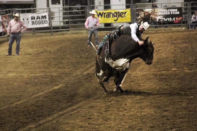 Ride that bull. - QUINN WELSCH PHOTO