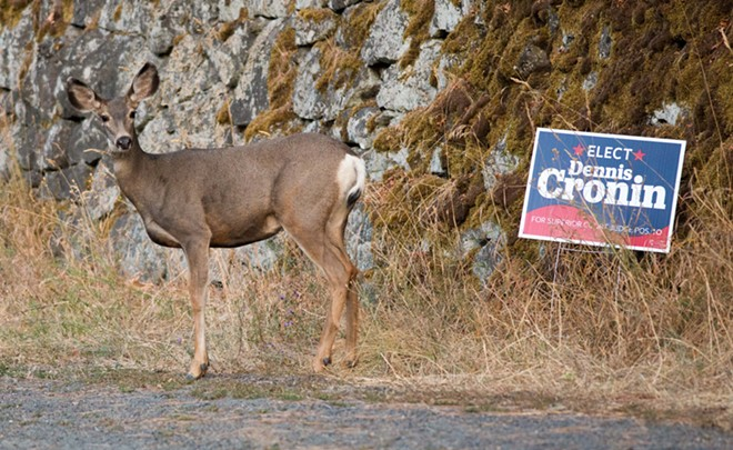 A deer appears to endorse Dennis Cronin for Spokane County Superior Court. - DANIEL WALTERS PHOTO