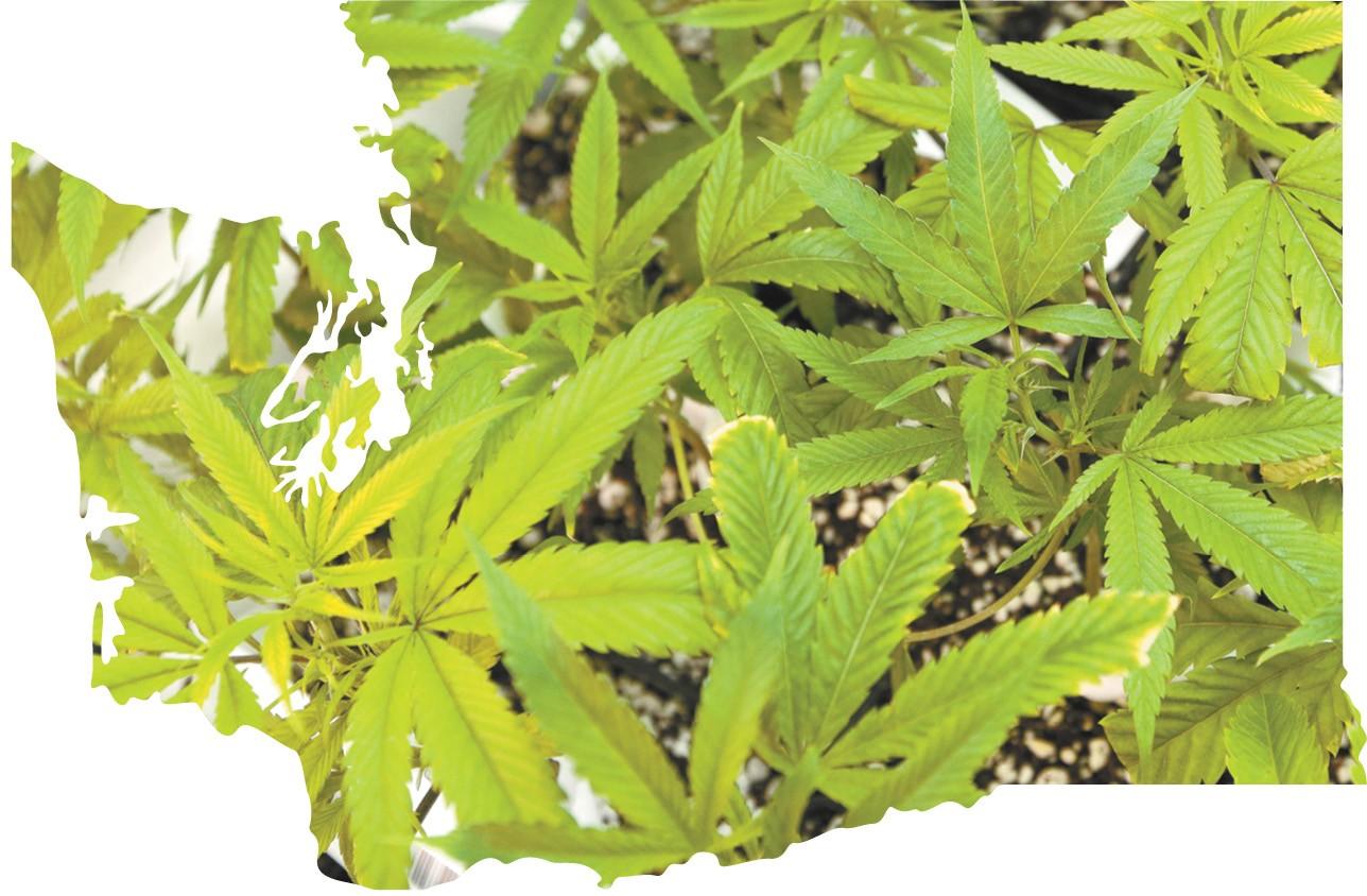 greenzone1-1-197eb7455bf57b75.jpg