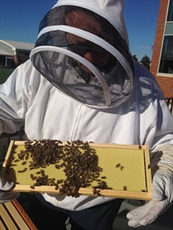A beekeeper holds a hive frame teeming with - bees - ELIZABETH HIGGINS PHOTO