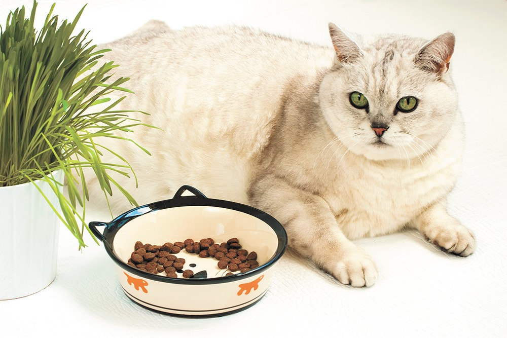 Keep kitties trimmer by measuring out their food for each meal.