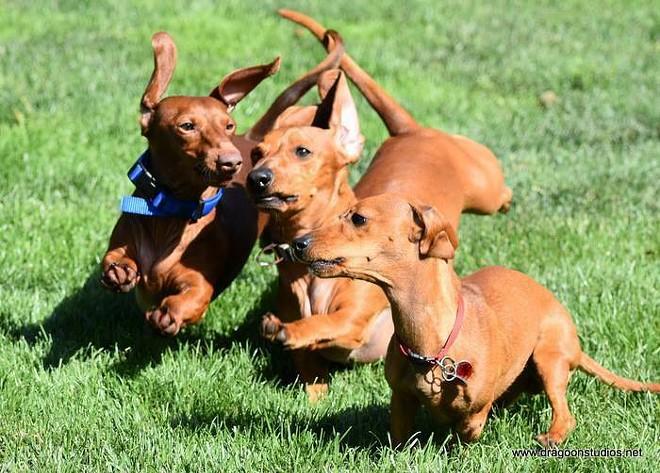 Run wieners, run! - DRAGOON STUDIOS