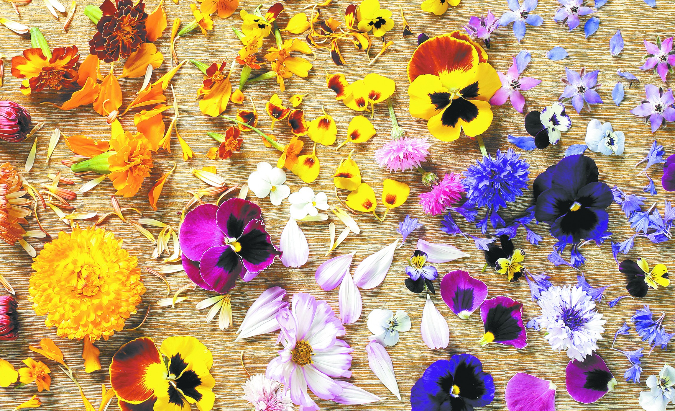 A sampling of the many edible flowers grown at Spokane's Ace of Spades Farm. - YOUNG KWAK